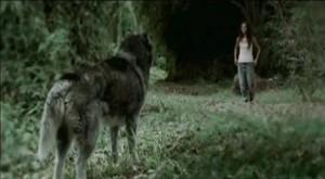 ulvene-er-kommet